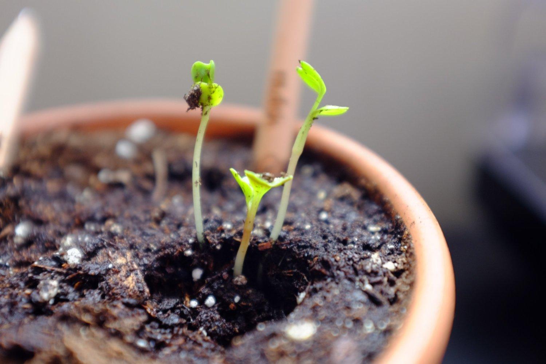 Как посадить цветок в горшок фото пошагово