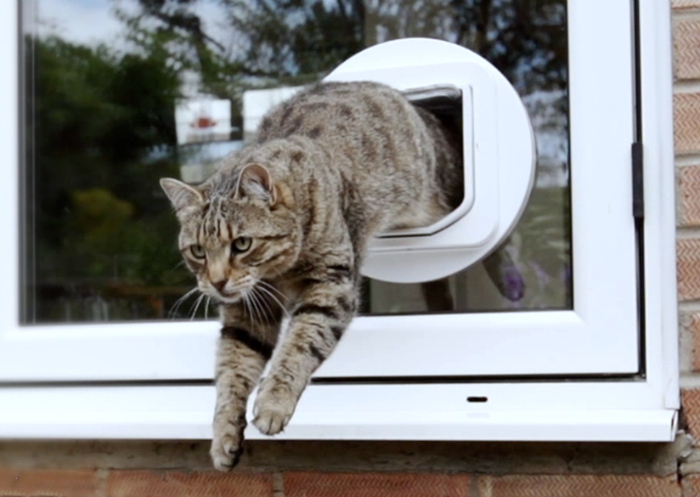 SureFlap Microchip Cat Door & Make your Cat Feel at Home with the SureFlap Microchip Cat Door ... Pezcame.Com